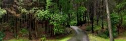 Back Road, Magnolia MA
